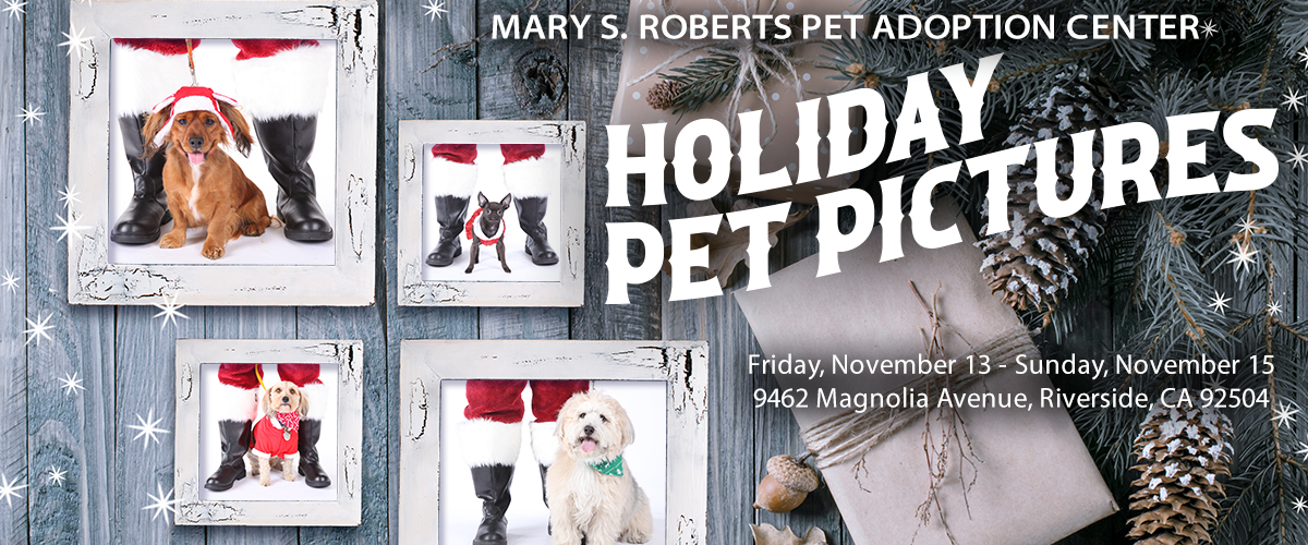 HOLIDAY_PET_PICTURES_BANNER_v1.0